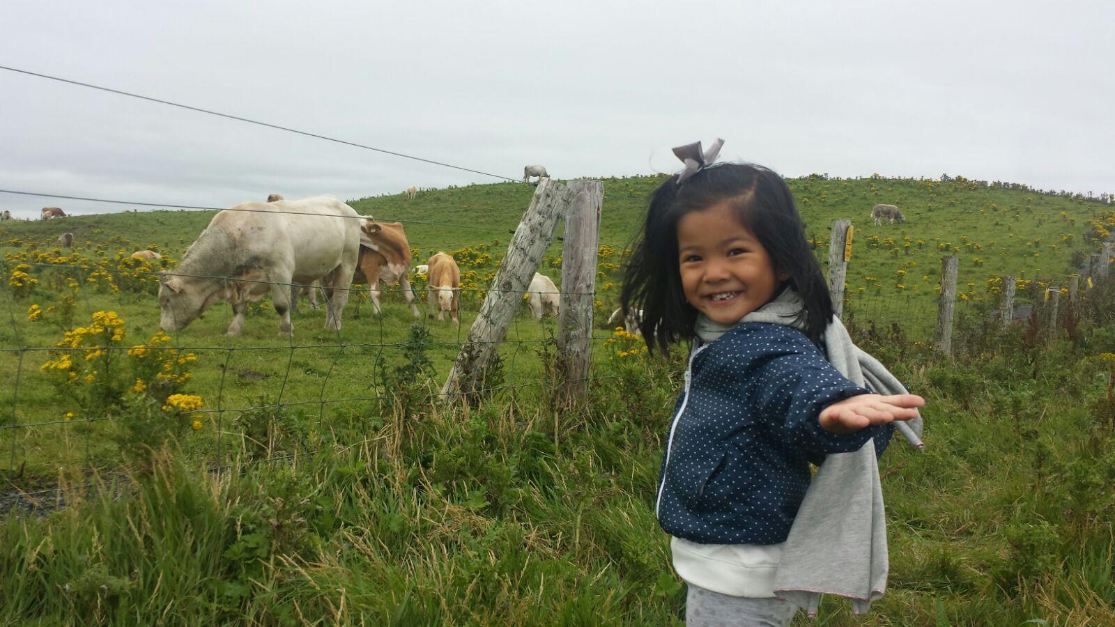 vacas con paula